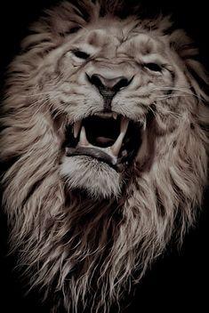The king par René Unger Lion Head Tattoos, Mens Lion Tattoo, Tier Wallpaper, Animal Wallpaper, Fierce Lion, Lion Photography, Lion Sketch, Lion Love, Lion Tattoo Design