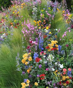 Report from the Chelsea Flower Show on PANTONEVIEW.com | Key plants: Nepeta Six Hills Giant Geums Mrs. Bradshaw Doronicum Finese