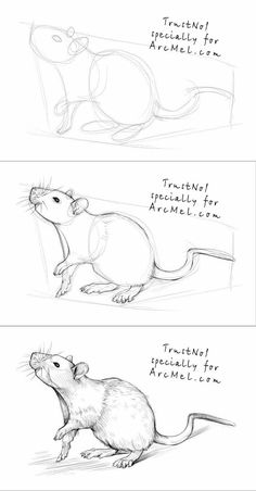 Drawing Tips How to draw a Rat Cute Animal Drawings, Animal Sketches, Art Drawings Sketches, Easy Drawings, Pencil Drawings, Drawing Lessons, Drawing Techniques, Drawing Tips, Drawing Reference
