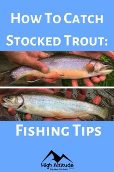 Stocking fish has multiple benefits. It provides an abundance of recreational fishing along with a boost for local economies. Trout fishing is one of America's favorite pastimes and an estimated 35% of all anglers specifically fish to land a trout. This article covers tips and techniques on how to catch stocked trout. For the purpose of this article, we will consider trout that is released in the last 6 months to be considered as a newly released fish. Crappie Fishing Tips, Favorite Pastime, Gone Fishing, Outdoor Recreation, Fish Hook, Outdoor Fun, Abundance, Spin, 6 Months