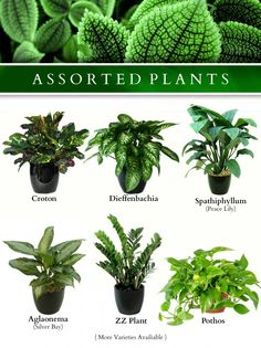 Lots of people are interested in getting facts about Giving your Indoor Plants Enough Light. We can help you. Just click our link to find out more. Indoor Plants Names, Indoor Tree Plants, Best Indoor Trees, Outdoor Plants, Indoor Garden, Trees To Plant, Little Plants, Small Plants, Exotic Plants