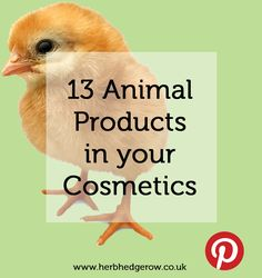 Not in Freyaluna skincare products. 13 Animal Products in Cosmetics Beauty Care, Beauty Hacks, Makeup Names, Arbonne Makeup, Why Vegan, Love Your Skin, In Cosmetics, Cosmetics Industry, Best Natural Skin Care