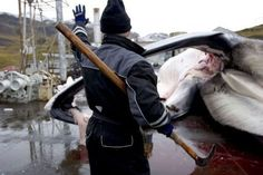Iceland halts fin whaling | New Europe
