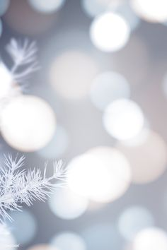 For a white and chic Christmas at home - HomeCNB Et Wallpaper, Winter Wallpaper, Christmas Wallpaper, Mobile Wallpaper, Wallpaper Backgrounds, Iphone Wallpaper, Wallpapers, Bokeh Wallpaper, Disney Wallpaper
