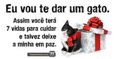 www.gatos de paz.com | Eu vou te dar um gato. Assim você terá 7 vidas pra cuidar e talvez ...