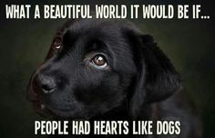 Yes what beautiful world it would be if people had hearts like dogs it would be so beautiful BC their are evil humans out there with pure Demons in their soul's