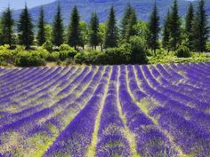 Provence, France - Middle of the week, you should get away (20 HQ Photos)