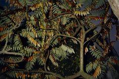 Tree seen from below by Fay Godwin