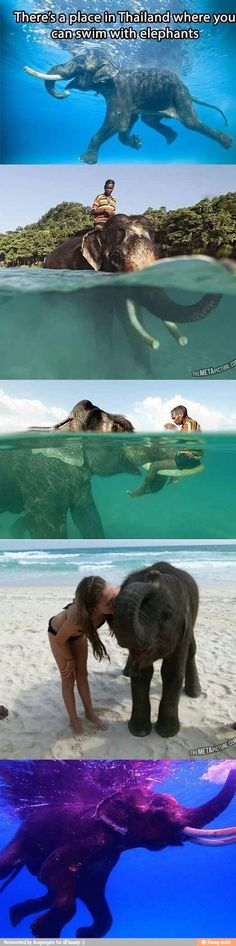 swimming with elephants in thailand - MY NEXT VACATION! Travel List, Travel Goals, Travel Bucket Lists, Paris Bucket List, Fun Travel, Explore Travel, Thailand Elephants, Elephant Sanctuary Thailand, Thailand Travel