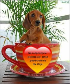 Dog Food Recipes, Humor, Polish, People, Humour, Dog Recipes, Jokes, Funny Humor