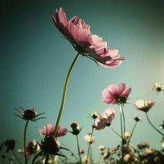 Suivre @moonlightice sur Instragram Plants, Instagram, Plant, Planets