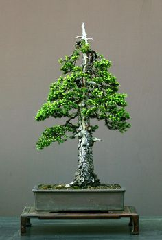 The Art of Bonsai Project - Feature Gallery: Bonsai Today / Art of Bonsai Photo Contest - Judging Results