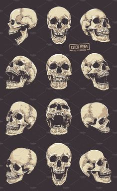 Anatomic Skulls Vector Pack Skulls # Pack # Anatomic - Anatomic Skulls Vector Pack Skulls # Pack # Anatomic You are in the right place about diy - Totenkopf Tattoos, Skeleton Drawings, Skeleton Art, Skull Tattoo Design, Skull Tattoos, Tattoo Designs, Skull Reference, Drawing Reference, Illustrator Tutorials