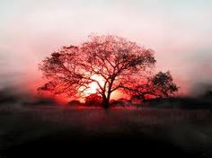 Sunsets!  WOW! This reminds me of my childhood tree where I'd go & tell all my dreams:)
