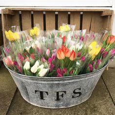 All the tulips  Buying British makes me so happy and tulips... they make everyone happy. British grown by @smithandmunson thanks @gtflowers.co.uk #underthefloralspell #yorkshireflorist #loveossett