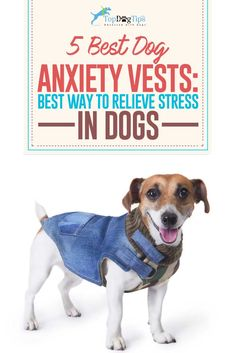 5 Best Dog Anxiety Vests to Relieve Stress in Dogs and Keep Them Calm. Dogs struggling with anxiety can be hard to live with. If the anxiety is mild, they may just shake or bark at thunder or loud noises. However, if the anxiety is severe they may become destructive, aggressive or make themselves ill. The best dog anxiety vests can help with this problem. #dogs #doganxiety #pets #stress #anxiety #separation #vests