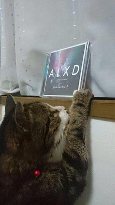 [Alexandros]2015/6/16 いよいよ最新アルバム「ALXD」本日発売です!!!ミルク
