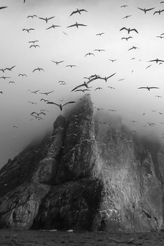 birds black and white foggy rock