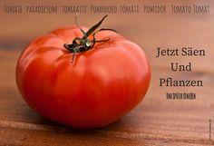 Tomaten säen und pflanzen leicht gemacht by @LebeLieberFesch