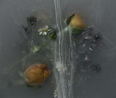 Danielle Kwaaitaal - fotografie van onderwerp in water + verf.....