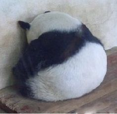 Sad panda -- JOSH WILL MURDER WHOMEVER IT WAS THAT HURT YOUR FEELINGS! WHO WAS IT? THEY'LL NEVER HURT YOU AGAIN!