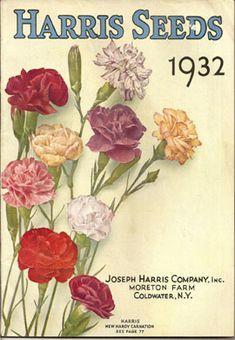 Harris/' rural annual 1901 retro flower seed catalog poster wall  art US SELLER