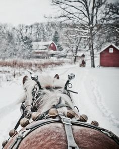 would love to have a white Christmas and go on a sleigh ride!