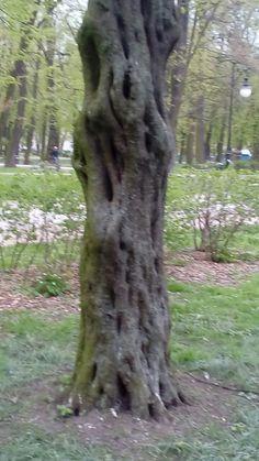 Dziwne drzewo