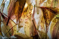 23 Breath-Takingly Beautiful Photos Of Frozen Flowers