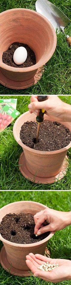 Planting a vegetable garden in pots