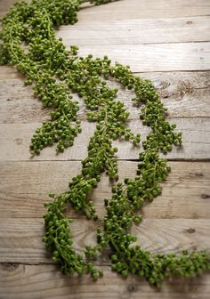 "Succulents String of Pearls 48"" Hanging Spray $13.99 each / 3 for $12 each"