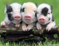 3 times cute!!!