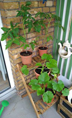 urban gardening - mein Stadbalkon