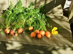 Romeo carrots... so cute for soup and small dishes and sweet too