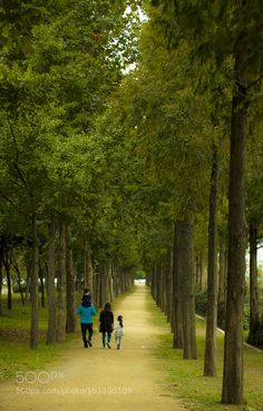 Family The Dawn Redwood forest Daegu by SanghyeongLee Family Photography #InfluentialLime