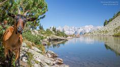 Wanderung zum Spiegelsee auf der Reiteralm. Im Hintergrund der Dachstein! Heart Of Europe, Austria, Hiking, Horses, Mountains, Nature, Travel, Animals, Pictures
