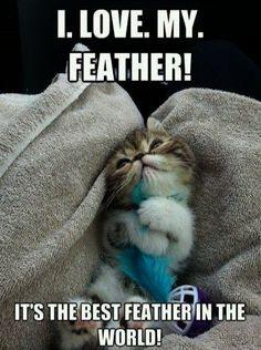 Feathers. Kittens. Ultimate Cuteness.