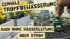 Automatische Gartenbewässerung ohne Frischwasseranschluss und Strom - Wasser sparen im Gemüsegarten - YouTube