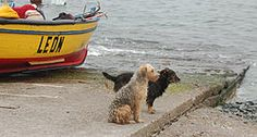 Canis lupus familiaris - Wikipedia, la enciclopedia libre