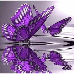Oh little purple butterfly