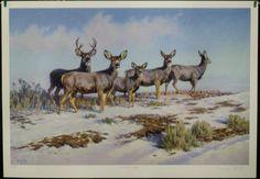 $95.00 Animal Wildlife Deer -- Curiosity Ridge by Dwayne Harty Art Print