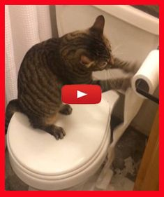 Funny Cat Memes, Funny Cat Videos, Funny Pics, Funny Pictures, Kitten Videos, Kitten Gif, Kittens Cutest, Cats And Kittens, Cat Toilet