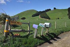 sonderfahrt: Otago Peninsula