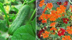 Garden Cottage, Garden Beds, Garden Plants, Herb Garden, Small Space Gardening, Gardening Tips, Garden Spells, Growing Gardens, Companion Planting