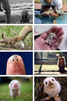 Animales bebitos