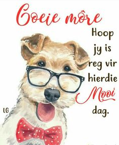 Good Morning Wishes, Good Morning Quotes, Animal Pictures, Cute Pictures, Lekker Dag, Evening Greetings, Afrikaanse Quotes, Goeie More, Morning Greeting