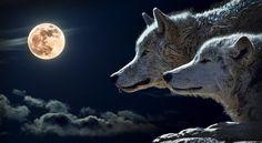 Луната е в апогей, това е колкото благоприятно, толкова и опасно - https://novinite.eu/lunata-e-v-apogej-tova-e-kolkoto-blagopriyatno-tolkova-i-opasno/