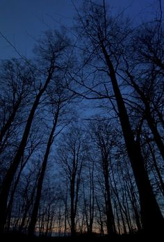 Denmark--The Tower's Alchemist begins in a dark forest in this country.