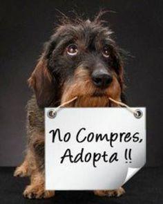 No compres, adopta. #AnimalPlanetMascotas #AnimalPlanet #Mascotas