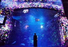 Teamlab projects digital images of flowers onto -fish at enoshima-aquarium in Japan-designboom-06